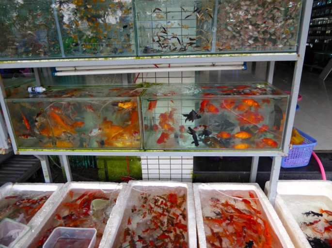 Hue Fish for Sale
