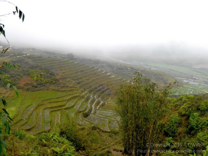 Terrace Step Rice Fields 2-Sapa