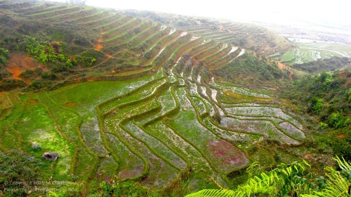 Terrace Step Rice Fields-Sapa