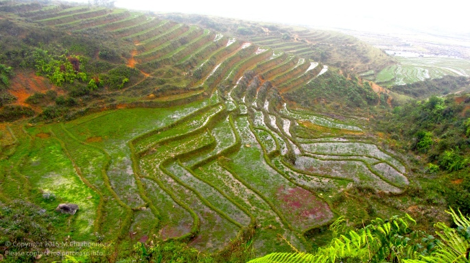 Terrace Step Rice Fields-Sapa